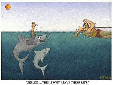 Des images qui me font marrer Requin