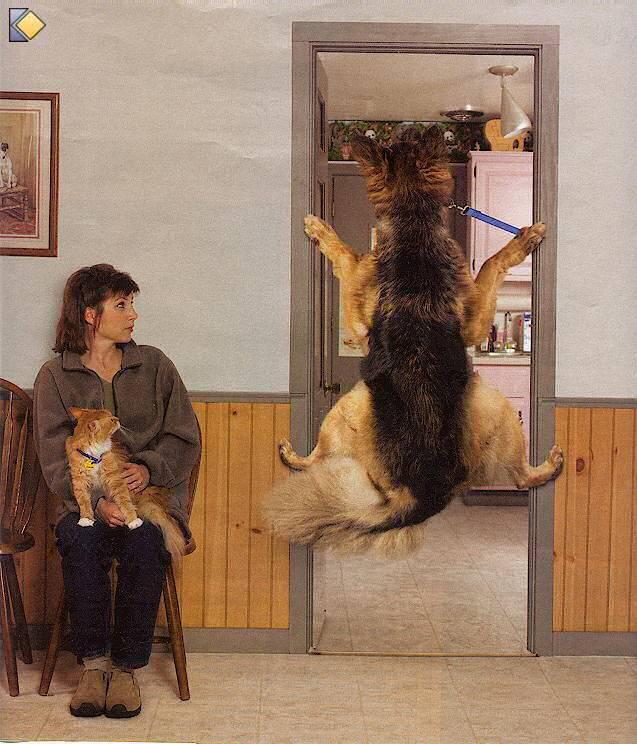 [Image: veterinaire_visite.jpg]